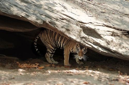 crouching-tiger